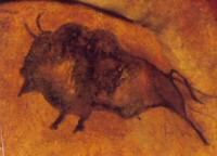 Les Bisons d'Europe, Ste Eulalie en Margeride, Lozère